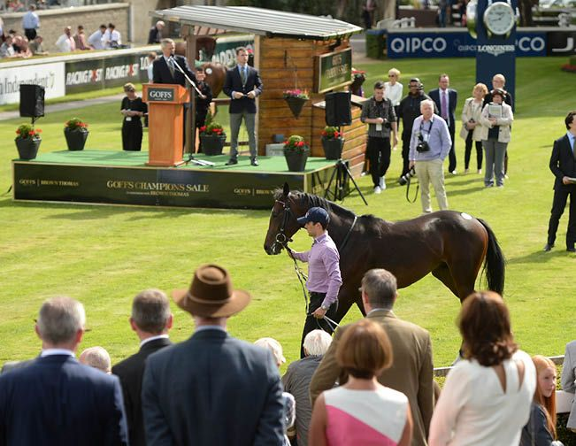 Goffs champions sale leopardstown