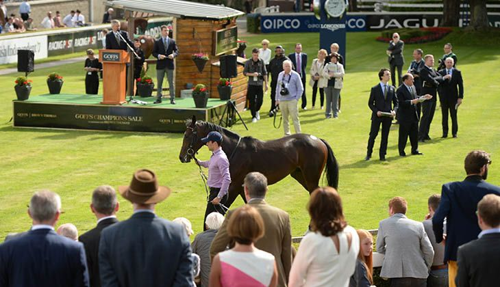 Goffs Champions Sale Leopardstown LICW