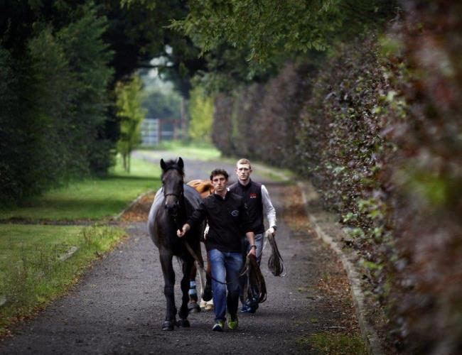 The Thoroughbred Trail at The Curragh